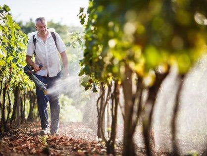 Весняна обробка винограду – перший крок до щедрого врожаю