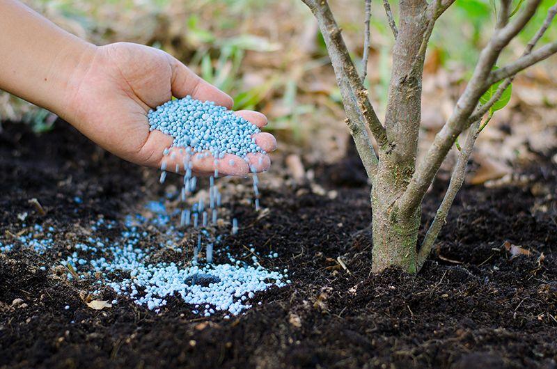 Азотні добрива: види, значення для рослин