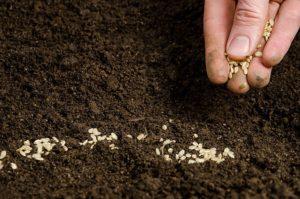 протруювач насіння: застосування