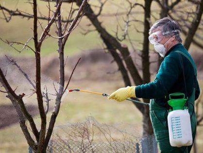 Опрыскивание деревьев весной – борьба с болезнями и вредителями