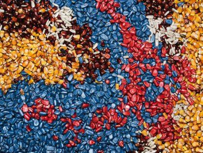 Протруювач насіння: обробка від хвороб і шкідників