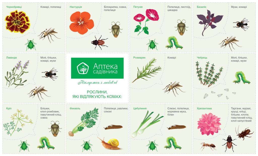 таблица совместимости растений и предшественников овощных культур