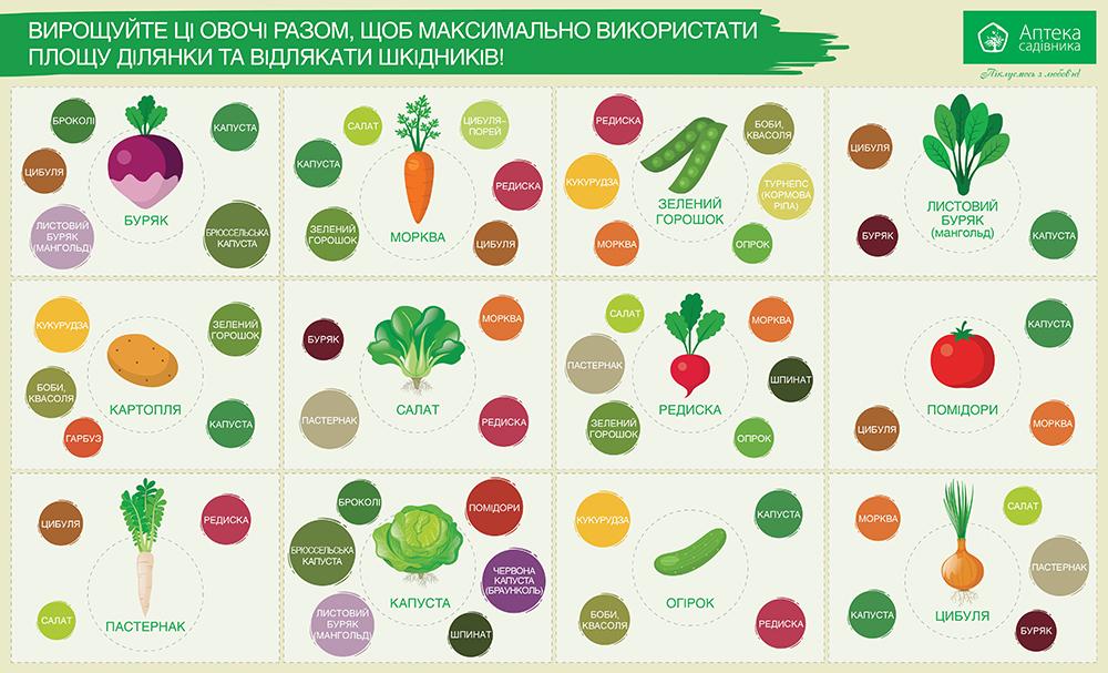 таблиця сумісності городніх культур