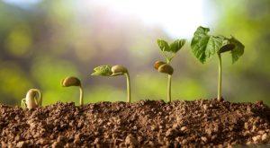 стимулятори росту рослин у дї