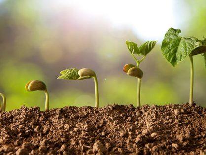 Выращивание рассады: топ-7 проблем и их успешное решение