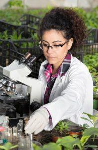 як створюються регулятори росту рослин