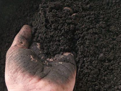 Виды грунтов: как повысить плодородие и снизить кислотность
