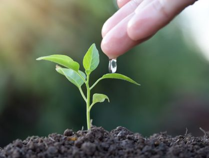 Вирощування розсади в домашніх умовах