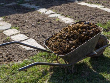 Підживлення винограду: чим удобрити лозу навесні та восени