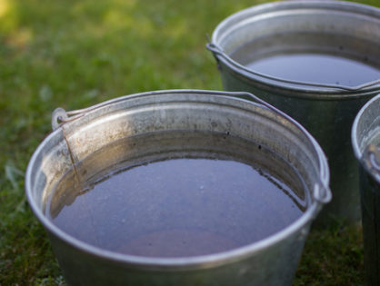 Полив винограда: когда и сколько воды лить