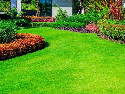 Красивый газон: 5 шагов к мечте
