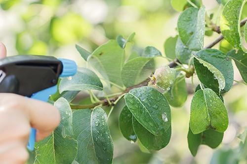 Уход за садом: какие работы необходимы деревьям