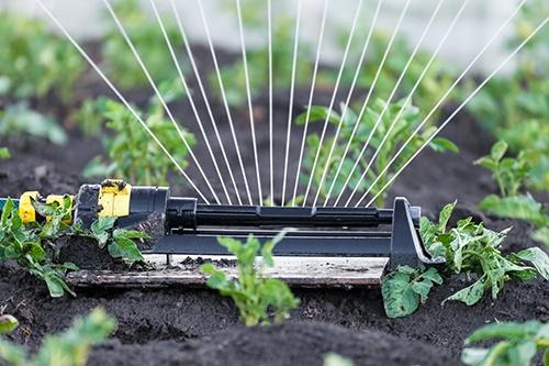Капельный полив сада: автоматический полив деревьев и газона