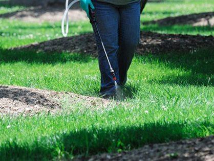 Сорняки на газоне – как бороться?