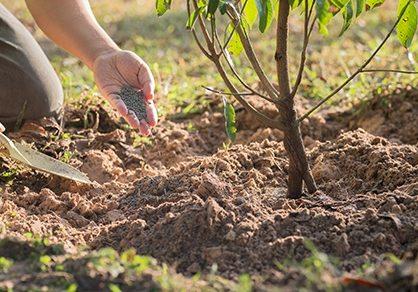 Подкормка деревьев весной и осенью: выбираем удобрения