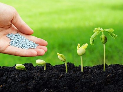 Средства защиты растений: какие бывают препараты