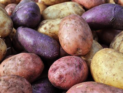 Выбираем второй хлеб – самые вкусные сорта картофеля