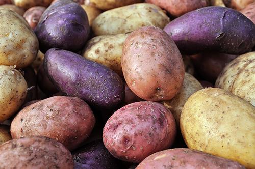 Обираємо другий хліб – найсмачніші сорти картоплі