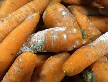 Болезни овощей при хранении