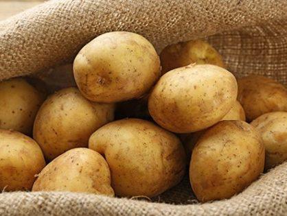 Хранение картофеля: как сохранить вкусный урожай