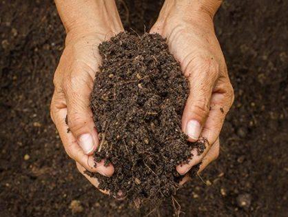 Обеззараживание почвы: уничтожаем болезни и вредителей в земле