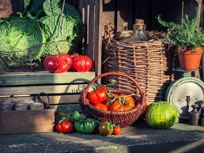 Сроки хранения овощей: в погребе, квартире, на балкон