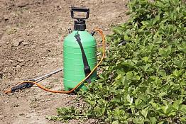 Обробка полуниці навесні та після збору врожаю