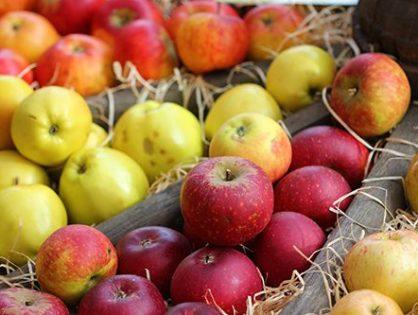 Сорти яблунь: улюблені дерева на десятиліття