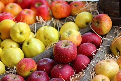 Сорта яблонь: любимые деревья на десятилетия