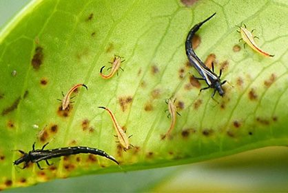 Сравнение инсектицидов «Антиколорад» и «Антиколорад макс»