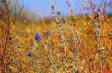 Гербицид «Антибурьян» против широкого спектра сорных растений